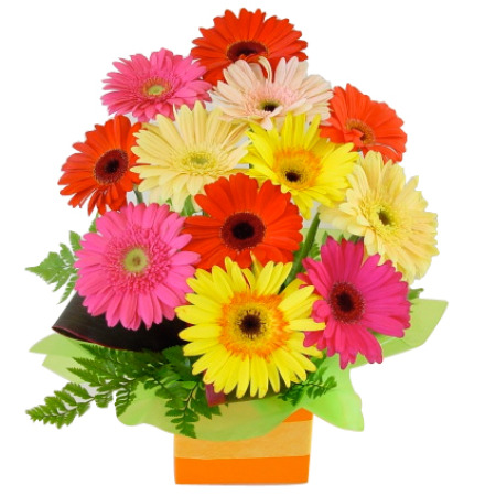 Gerberas presented in a Square Box