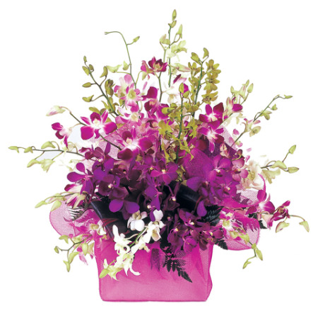 Singapore Orchids in a Square Box
