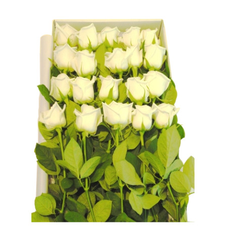 Roses in a Long Presentation Box